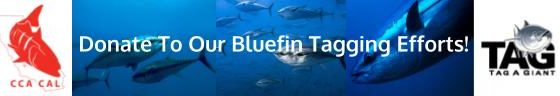 Bluefin Website Graphic